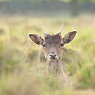 Bushey Park Deer by Sunnymede