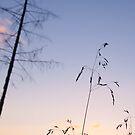 Dawn Grass by Sunnymede