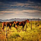 Two Horses  by socalgirl