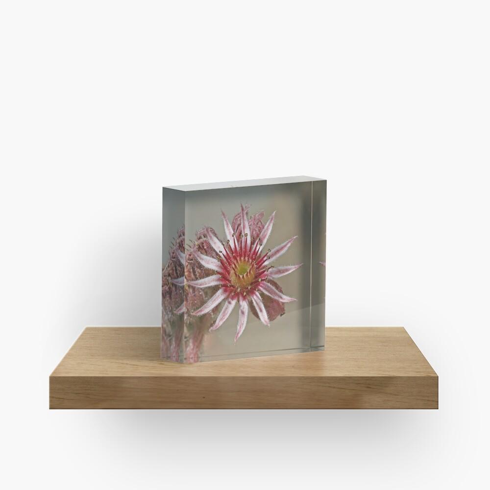 Worship the Sun Acrylic Block