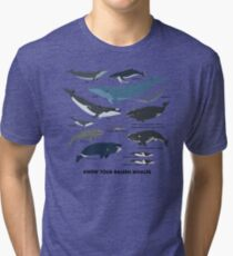 Camiseta de tejido mixto Conozca a sus ballenas barbadas