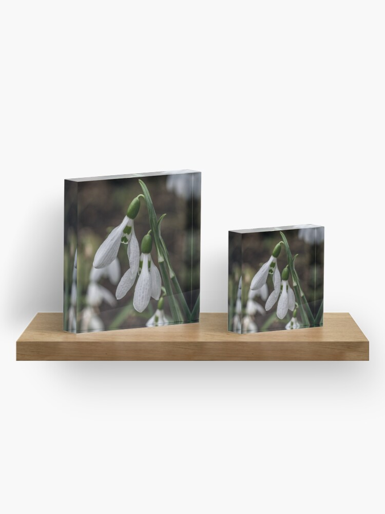 Alternative Ansicht von Pretty Snowdrop Flowers Acrylblock