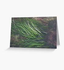 EAL GRASS Greeting Card