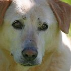 Bless Your Old Heart and Soul Jake - 1997-2010 by Vickie Emms