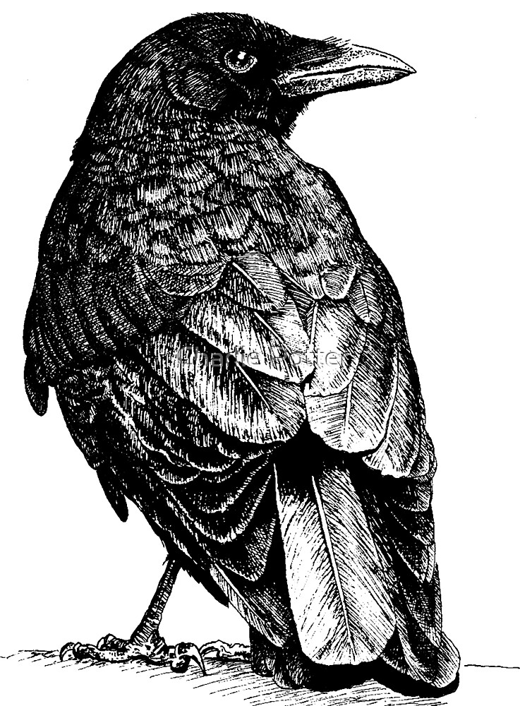 Crow by Charlie Potter