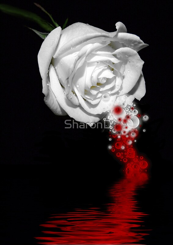 Quot Bleeding Rose Quot Posters By Sharond Redbubble