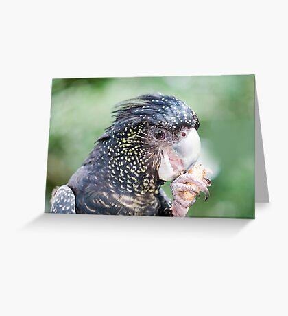 Eating Peanuts - black cockatoo Greeting Card