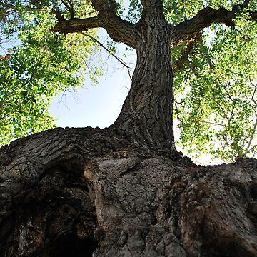 Branch by gladyanne
