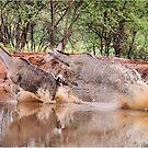 TRAGELAPHUS STRESTREPSICEROS (Kudu) by Magriet Meintjes