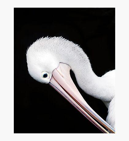 Curves - pelican portrait Photographic Print