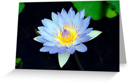 Blue - waterlilly by Jenny Dean