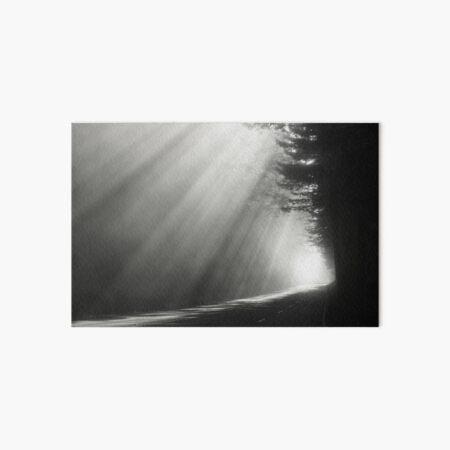 Redwood National Forest Art Board Print