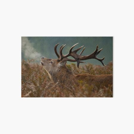 Red Deer Stag Art Board Print