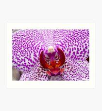 Phalaenopsis orchid Art Print