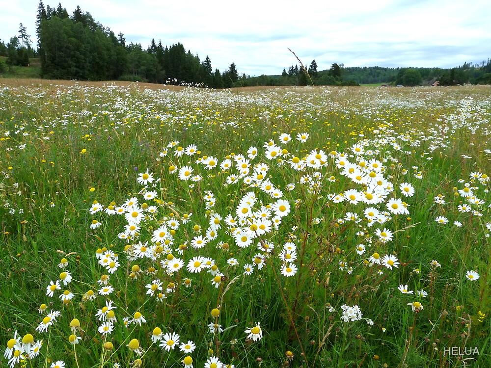 Summer Meadow at Lerdal by HELUA