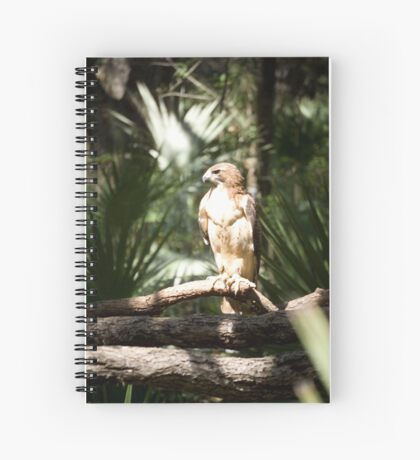 Red Tail Hawk Spiral Notebook
