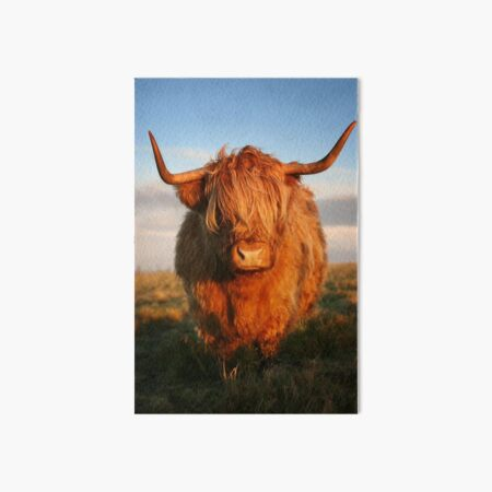 Highland Cow Art Board Print