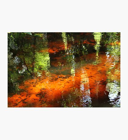 A florida stream Photographic Print