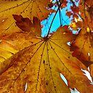 «Hojas de otoño» de ampphotography