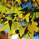 «Hojas de otoño 2» de ampphotography
