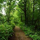 Forest Path by Rhonda Blais