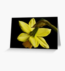 Daffodil flower Greeting Card