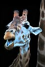 Cheeky Giraffe by Extraordinary Light