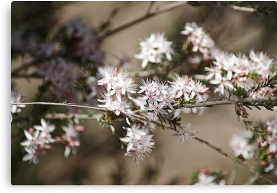 Wildflowers by garts