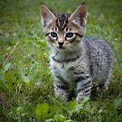 Tiger Jr. by Appel