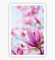 Magenta Magnolia Sticker