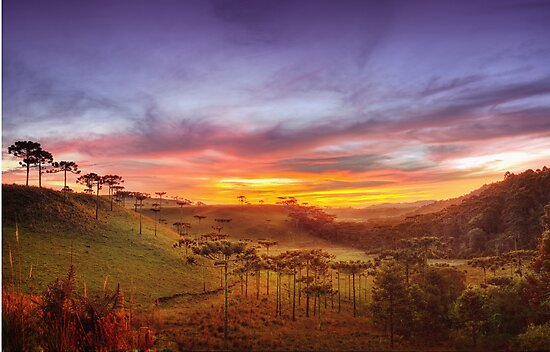 Araucaria Vale by MiVisions
