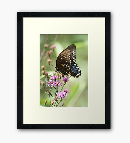 Captured In The Moment Framed Print