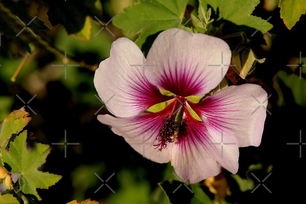 Pink Macro Hibiscus by TeAnne