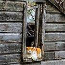 Life is Good as a Cat by Troy Stapek