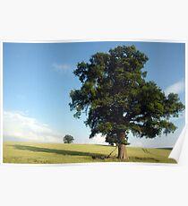 Oaktree in field Poster