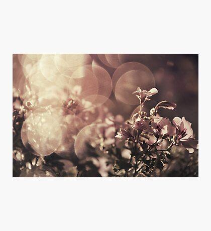 Immersed in illumination part II Photographic Print