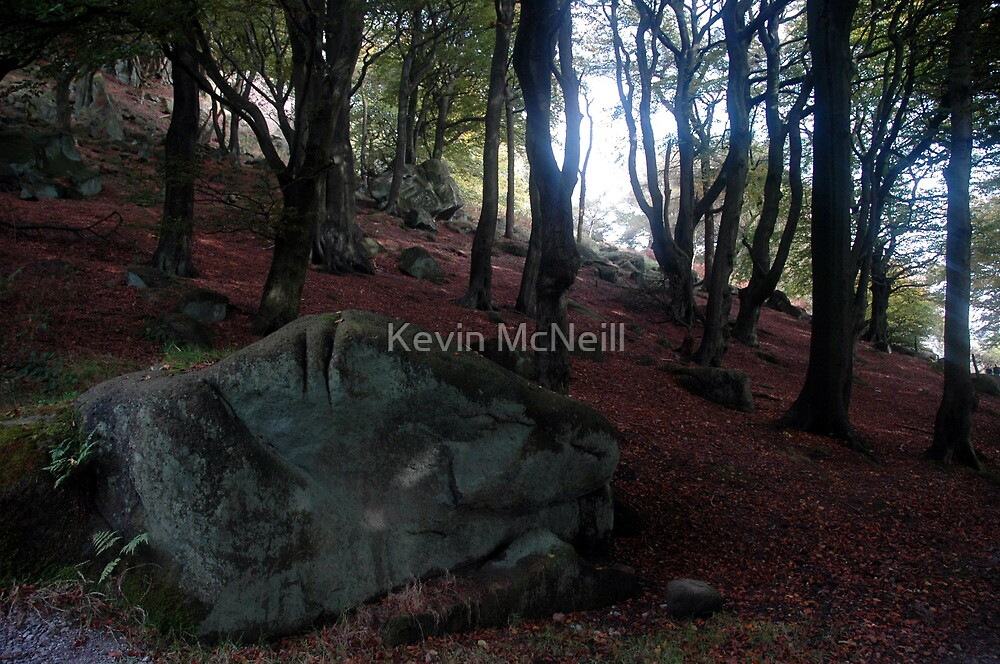 Rock in wood by Kevin McNeill