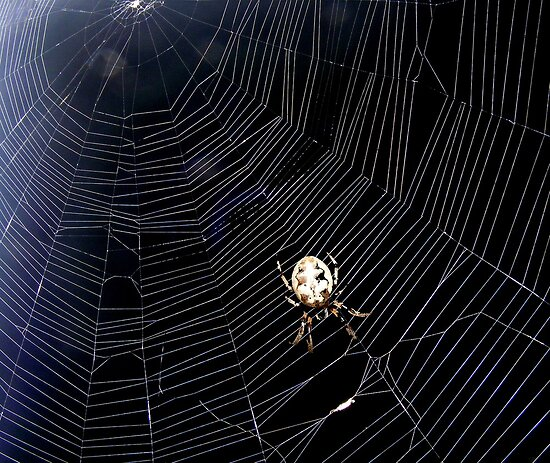 The Missour Spider said to the Fly!! by barnsis