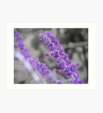 Purple Flowers UC Davis Art Print
