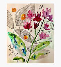 botanical composition Photographic Print