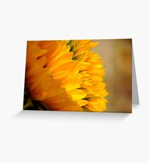 Sunflower Petals doubles Greeting Card