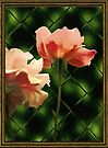 Pink Roses, Patterned Glass by RC deWinter