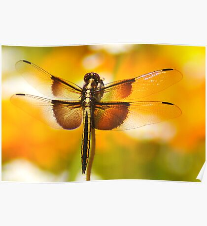 Dragonfly Marmalade Poster