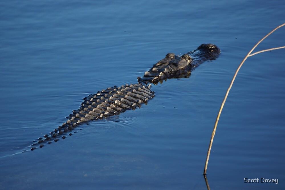 Alligator by Scott Dovey
