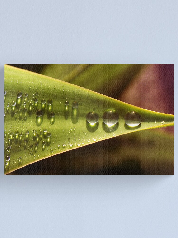 Alternate view of Raindrops in a Row Canvas Print