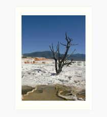 Dead Tree at Mammoth Hot Springs Art Print