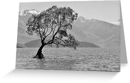 Stand - Queenstown, New Zealand by Jason Weigner
