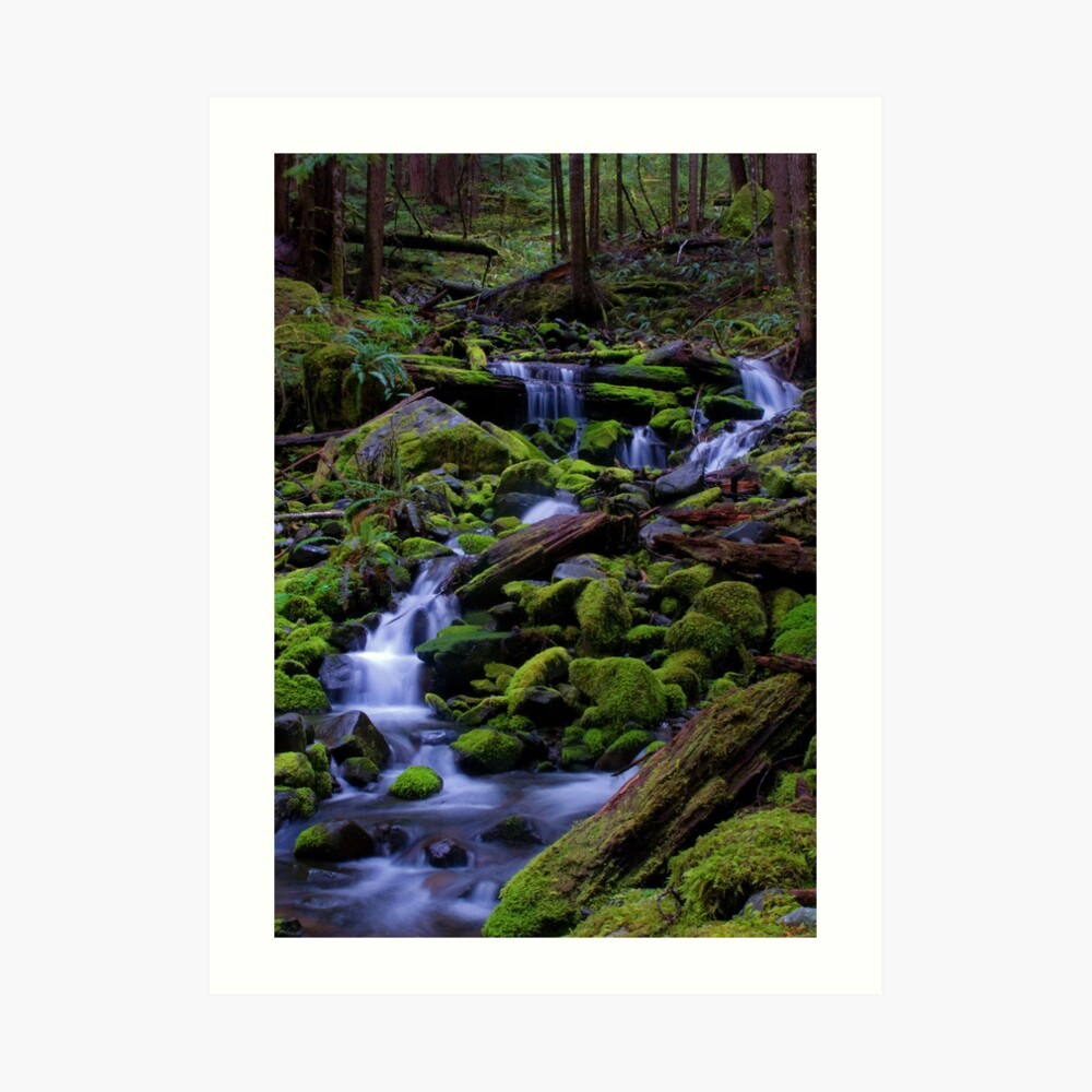 Forest Voices Art Print