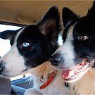 TWO BACKSEAT DRIVERS ! von Magriet Meintjes