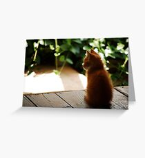 Sitting Kitten Greeting Card